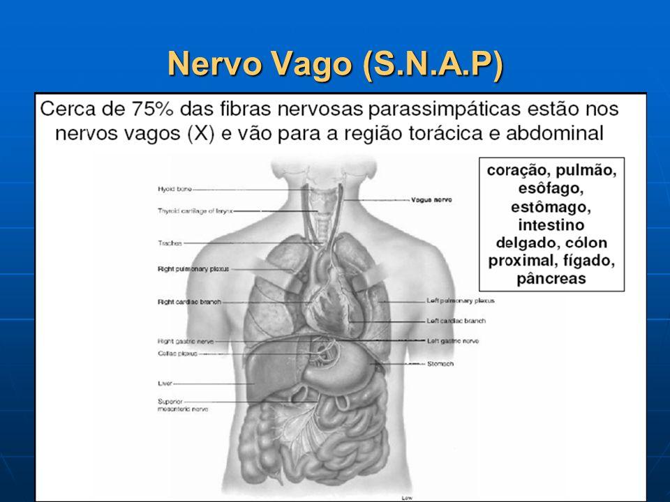 Nervo Vago (S.N.A.P)