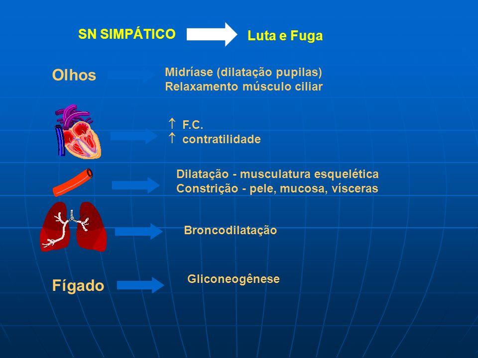 Olhos Fígado SN SIMPÁTICO Luta e Fuga Midríase (dilatação pupilas)