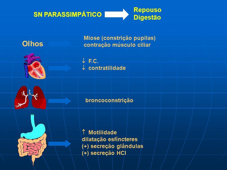 Olhos Repouso Digestão SN PARASSIMPÁTICO Miose (constrição pupilas)