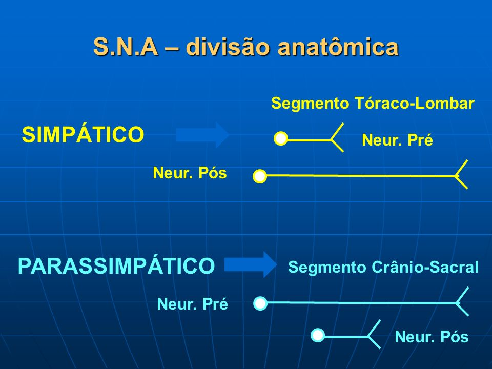 S.N.A – divisão anatômica