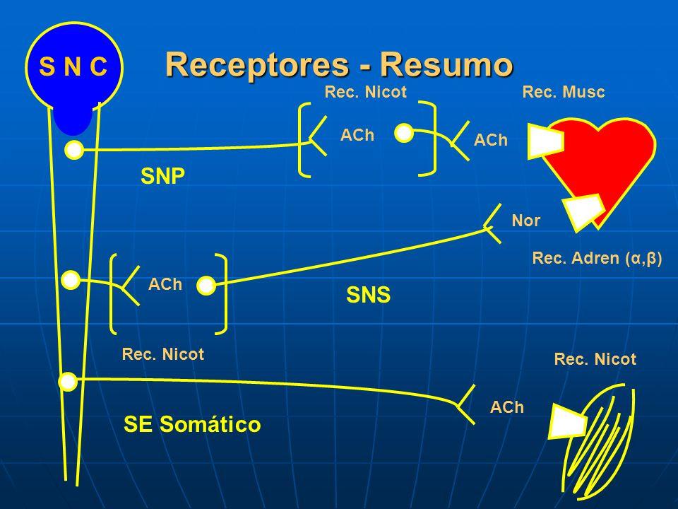 Receptores - Resumo S N C SNP SNS SE Somático Rec. Nicot Rec. Musc ACh