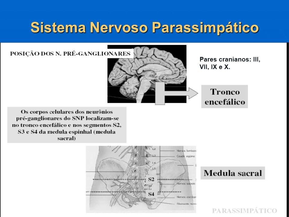 Sistema Nervoso Parassimpático