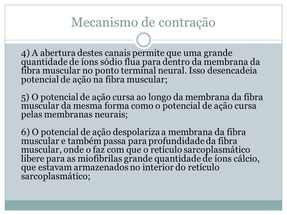 Mecanismo de contração