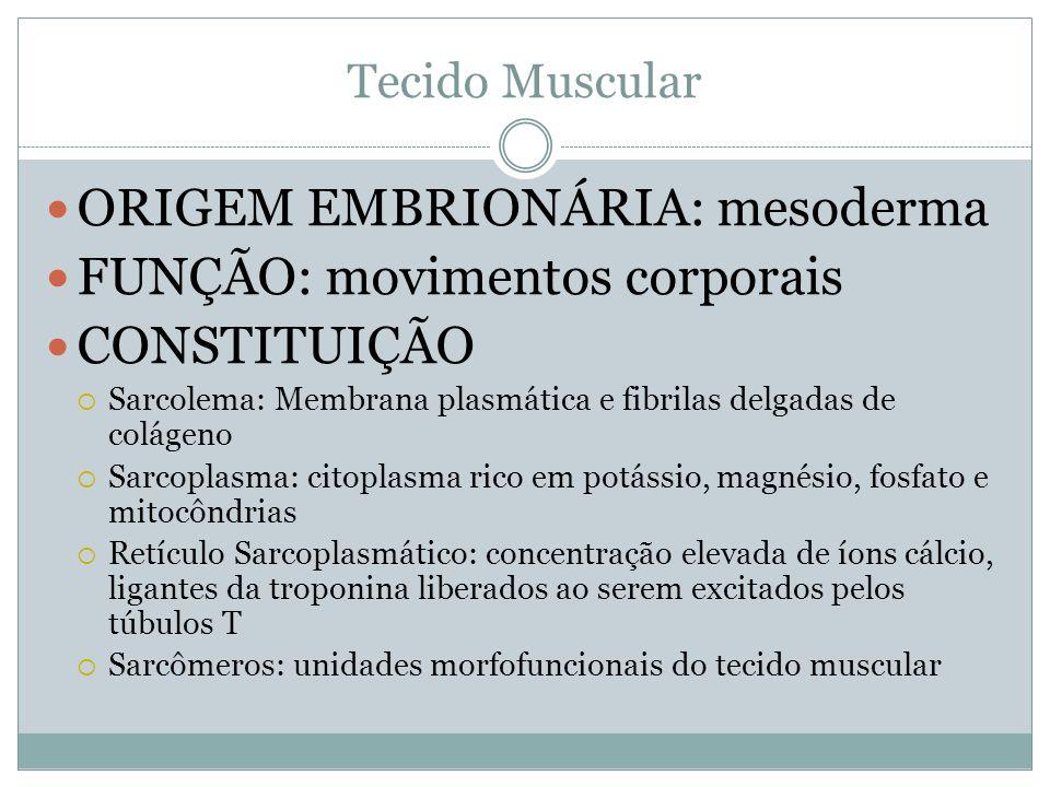 ORIGEM EMBRIONÁRIA: mesoderma FUNÇÃO: movimentos corporais