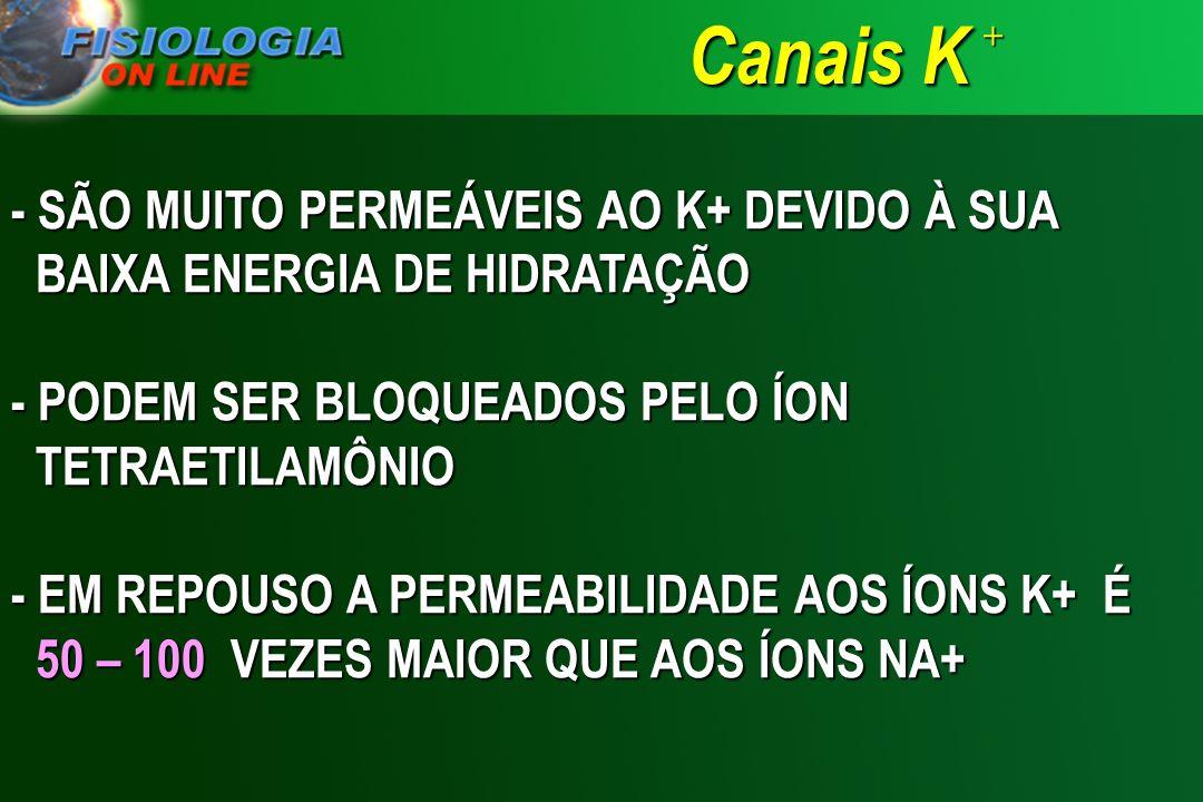 Canais K + - SÃO MUITO PERMEÁVEIS AO K+ DEVIDO À SUA BAIXA ENERGIA DE HIDRATAÇÃO. - PODEM SER BLOQUEADOS PELO ÍON TETRAETILAMÔNIO.