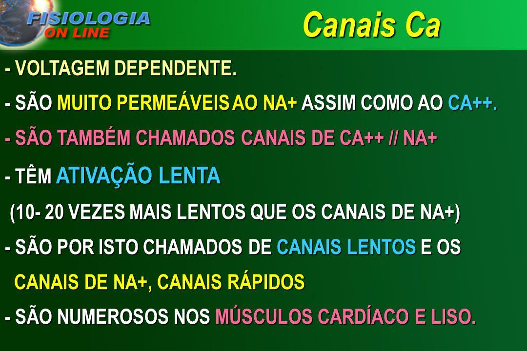 Canais Ca - VOLTAGEM DEPENDENTE.