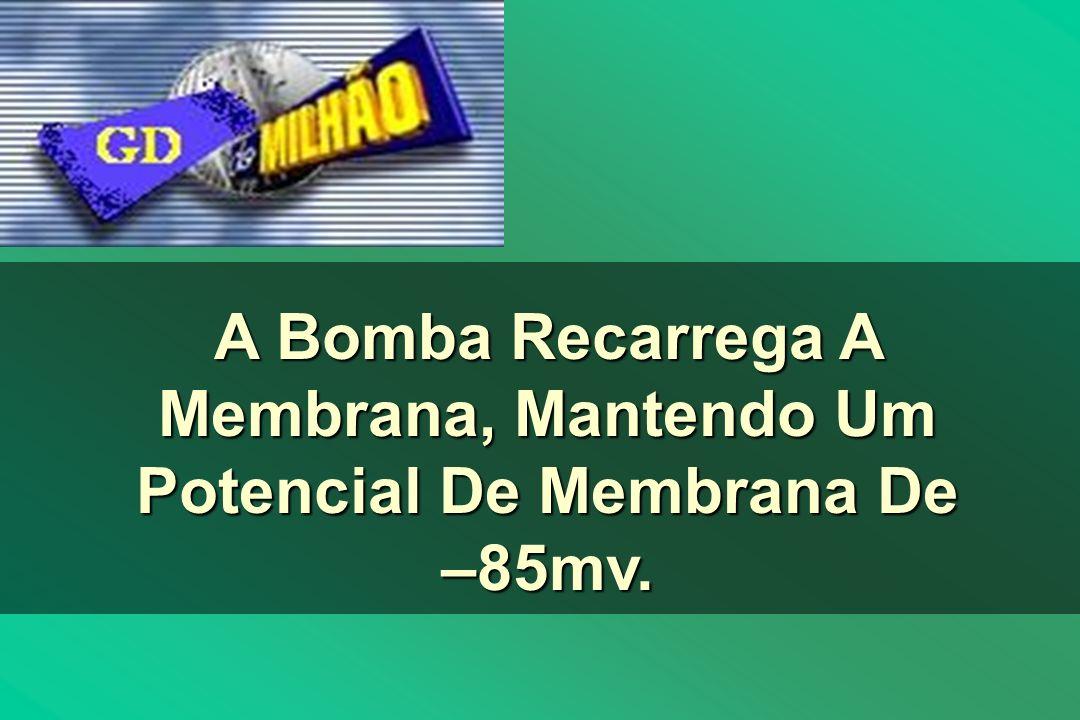 A Bomba Recarrega A Membrana, Mantendo Um Potencial De Membrana De –85mv.