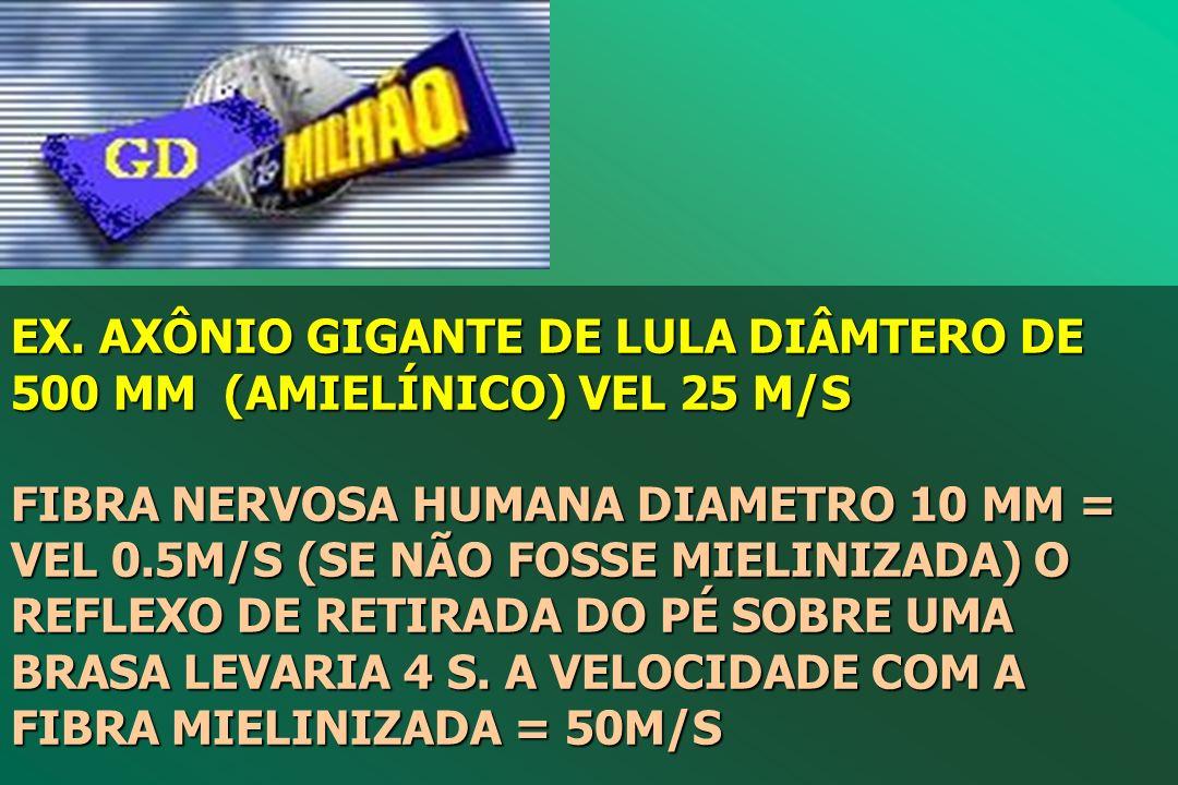 EX. AXÔNIO GIGANTE DE LULA DIÂMTERO DE 500 ΜM (AMIELÍNICO) VEL 25 M/S