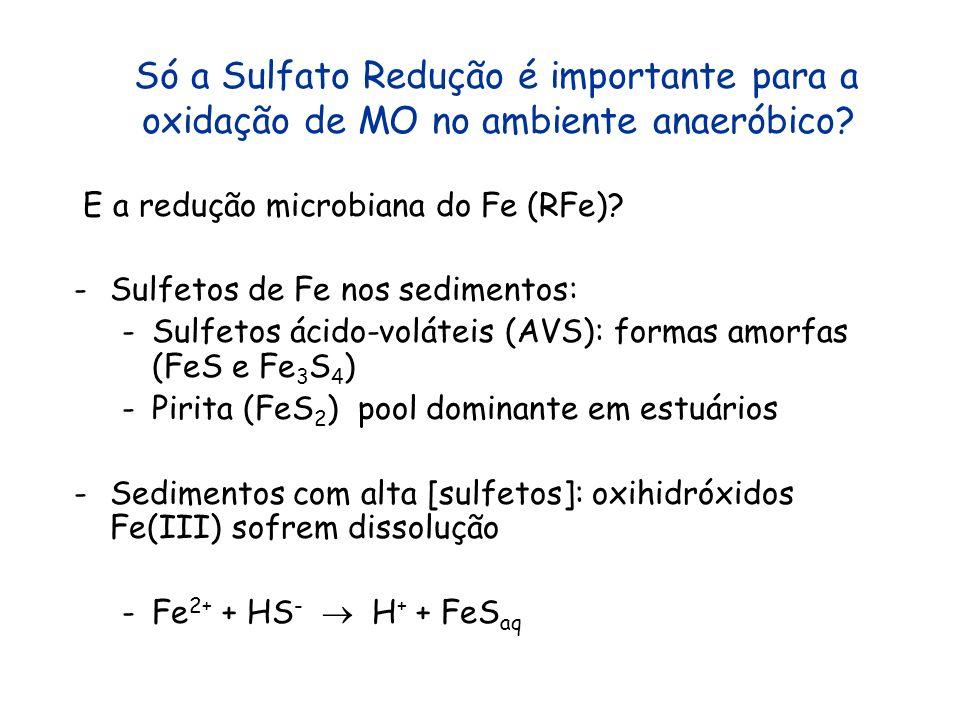 Só a Sulfato Redução é importante para a oxidação de MO no ambiente anaeróbico