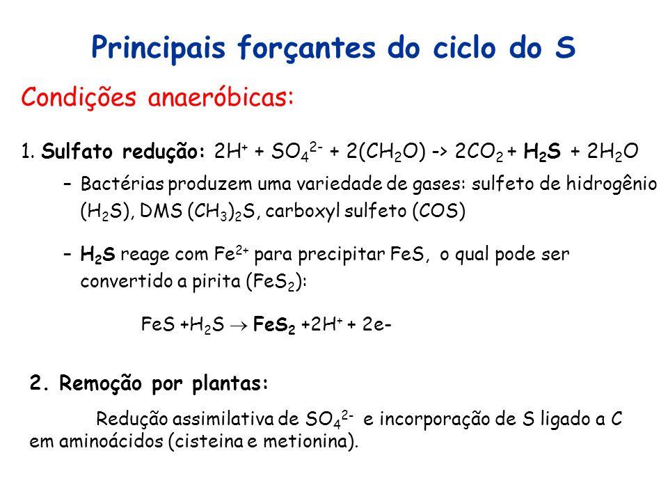 Principais forçantes do ciclo do S