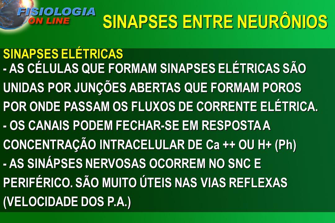 SINAPSES ENTRE NEURÔNIOS
