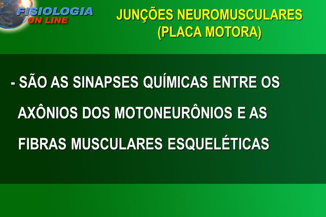 JUNÇÕES NEUROMUSCULARES (PLACA MOTORA)
