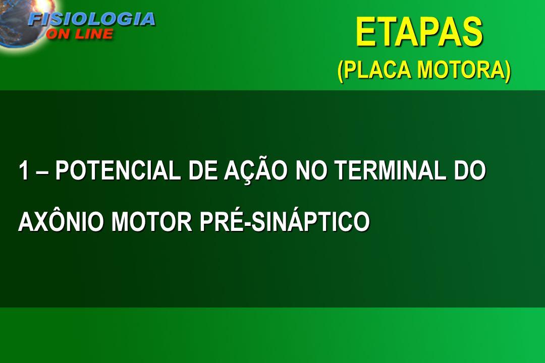 ETAPAS (PLACA MOTORA) 1 – POTENCIAL DE AÇÃO NO TERMINAL DO AXÔNIO MOTOR PRÉ-SINÁPTICO