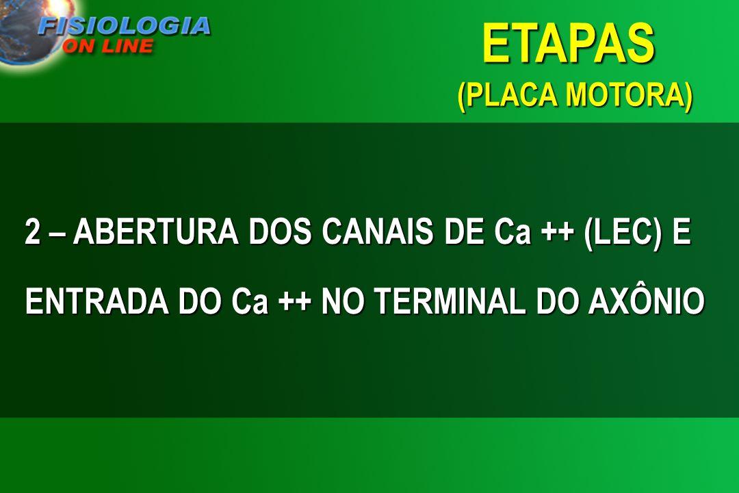 ETAPAS (PLACA MOTORA) 2 – ABERTURA DOS CANAIS DE Ca ++ (LEC) E ENTRADA DO Ca ++ NO TERMINAL DO AXÔNIO.
