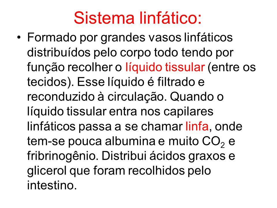 Sistema linfático: