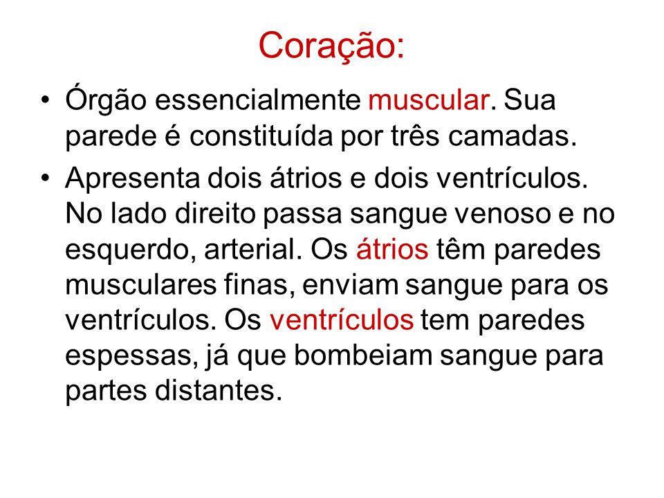 Coração: Órgão essencialmente muscular. Sua parede é constituída por três camadas.