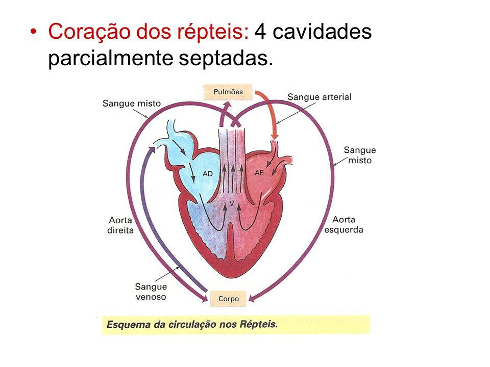 Coração dos répteis: 4 cavidades parcialmente septadas.