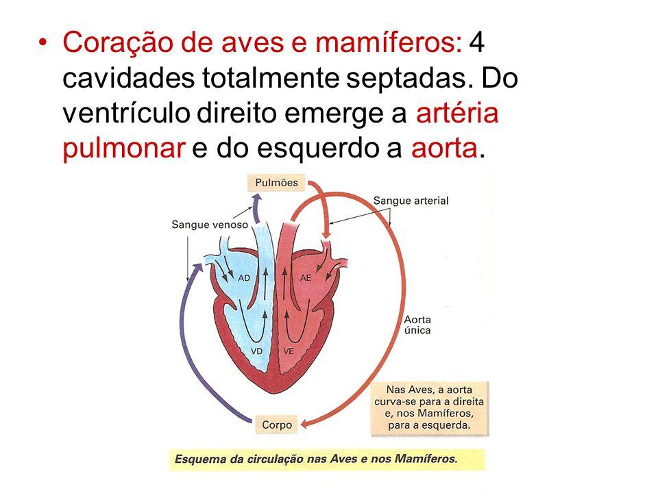 Coração de aves e mamíferos: 4 cavidades totalmente septadas