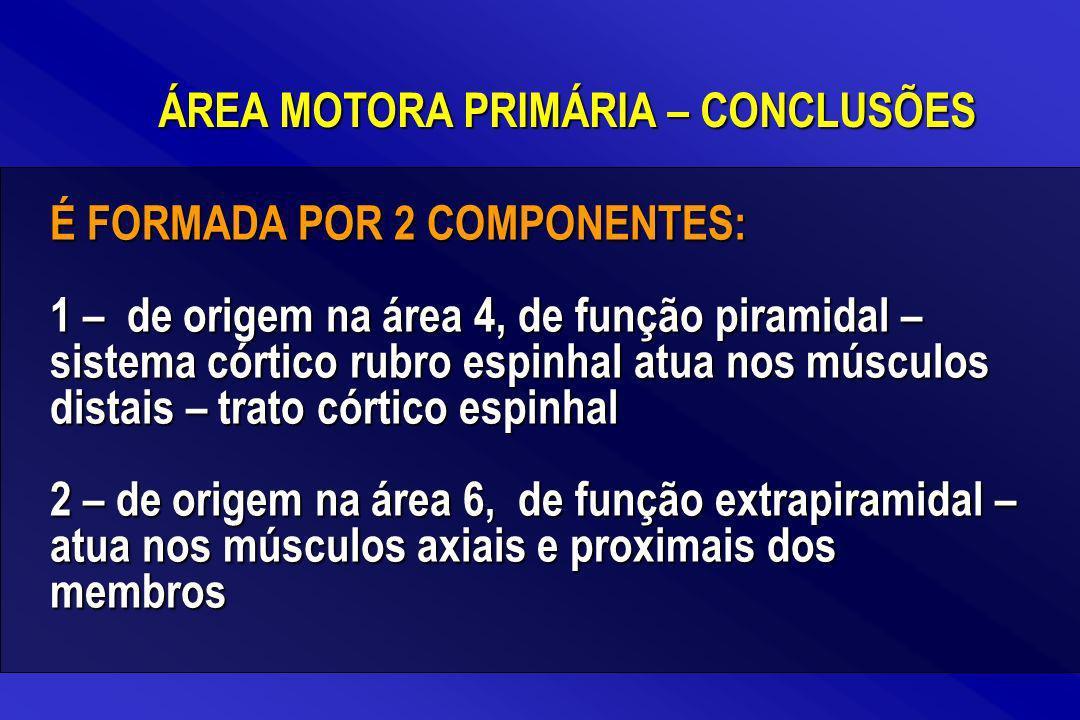 ÁREA MOTORA PRIMÁRIA – CONCLUSÕES