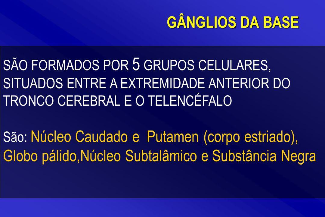 GÂNGLIOS DA BASE SÃO FORMADOS POR 5 GRUPOS CELULARES, SITUADOS ENTRE A EXTREMIDADE ANTERIOR DO TRONCO CEREBRAL E O TELENCÉFALO.