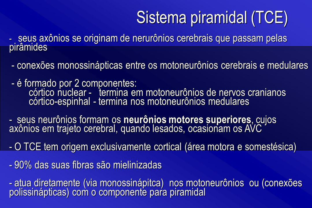 Sistema piramidal (TCE)