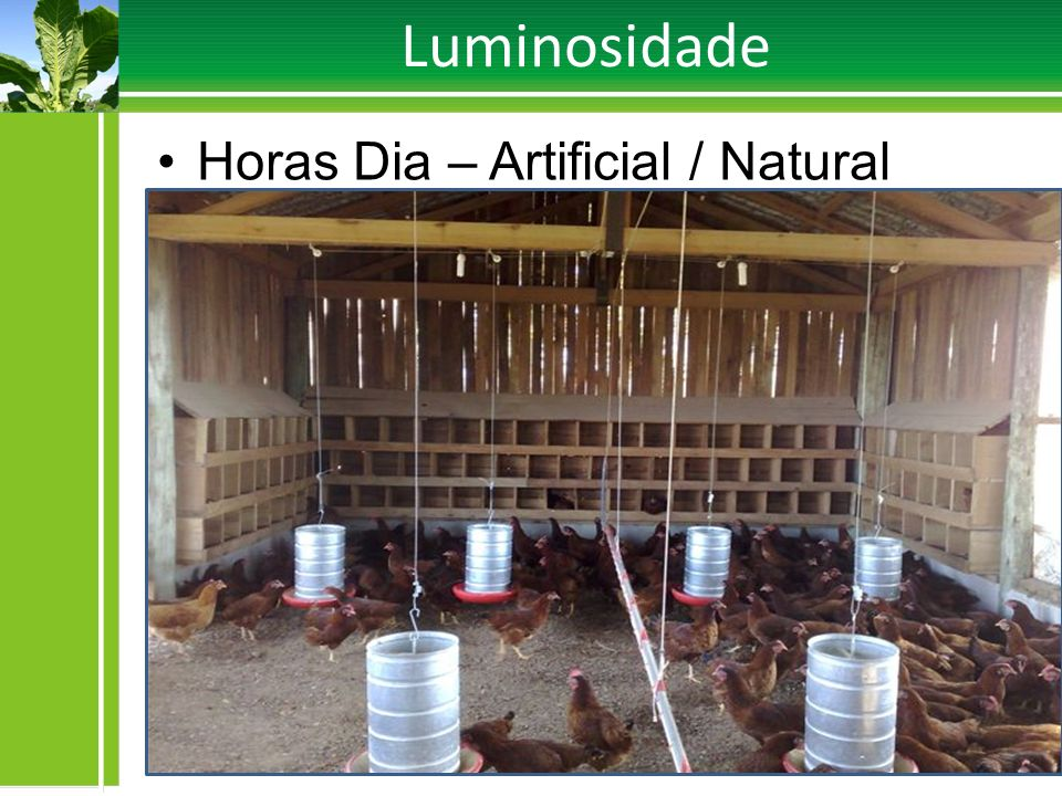 Luminosidade Horas Dia – Artificial / Natural