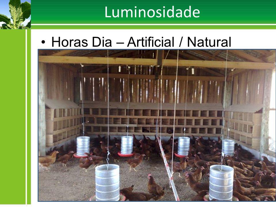 Luminosidade Horas Dia – Artificial / Natural