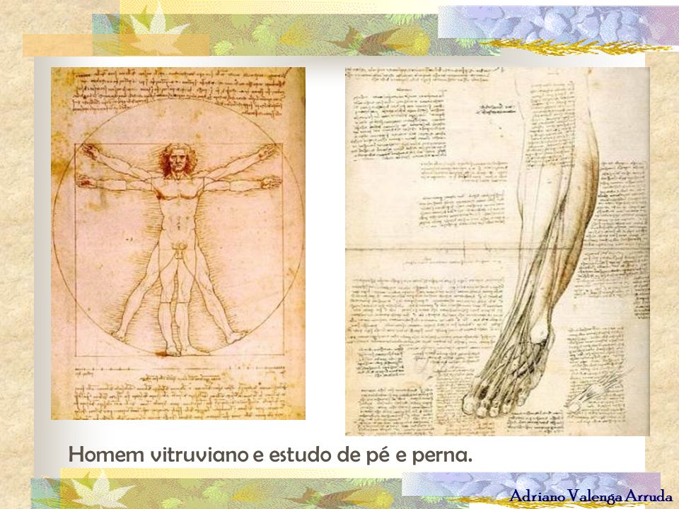 Homem vitruviano e estudo de pé e perna.