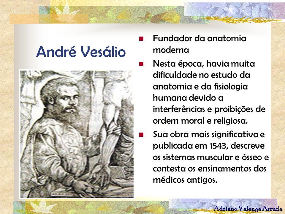 André Vesálio Fundador da anatomia moderna