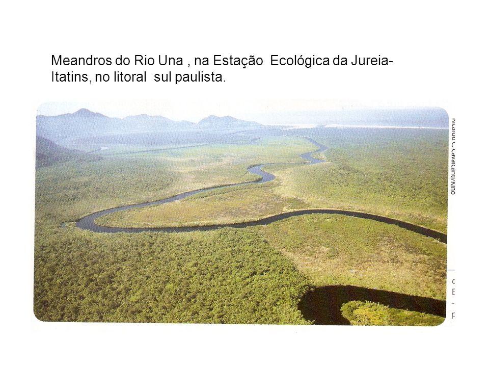 Meandros do Rio Una , na Estação Ecológica da Jureia-Itatins, no litoral sul paulista.