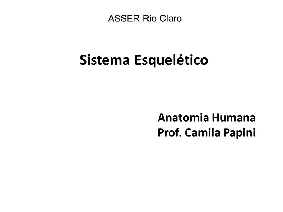 Sistema Esquelético Anatomia Humana Prof. Camila Papini