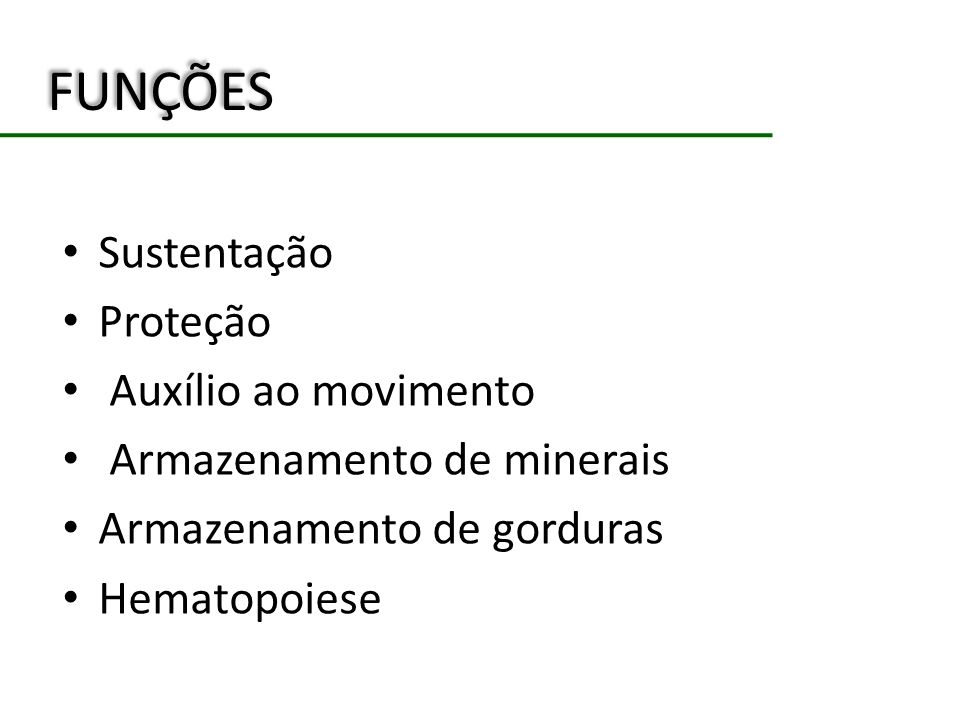 FUNÇÕES Sustentação Proteção Auxílio ao movimento