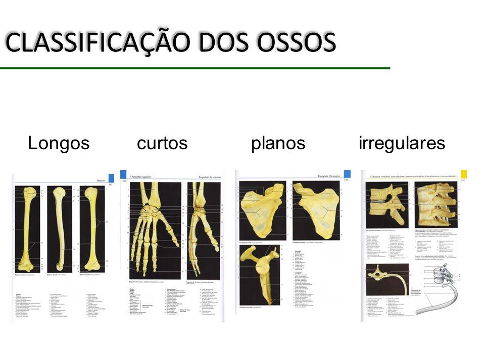 CLASSIFICAÇÃO DOS OSSOS