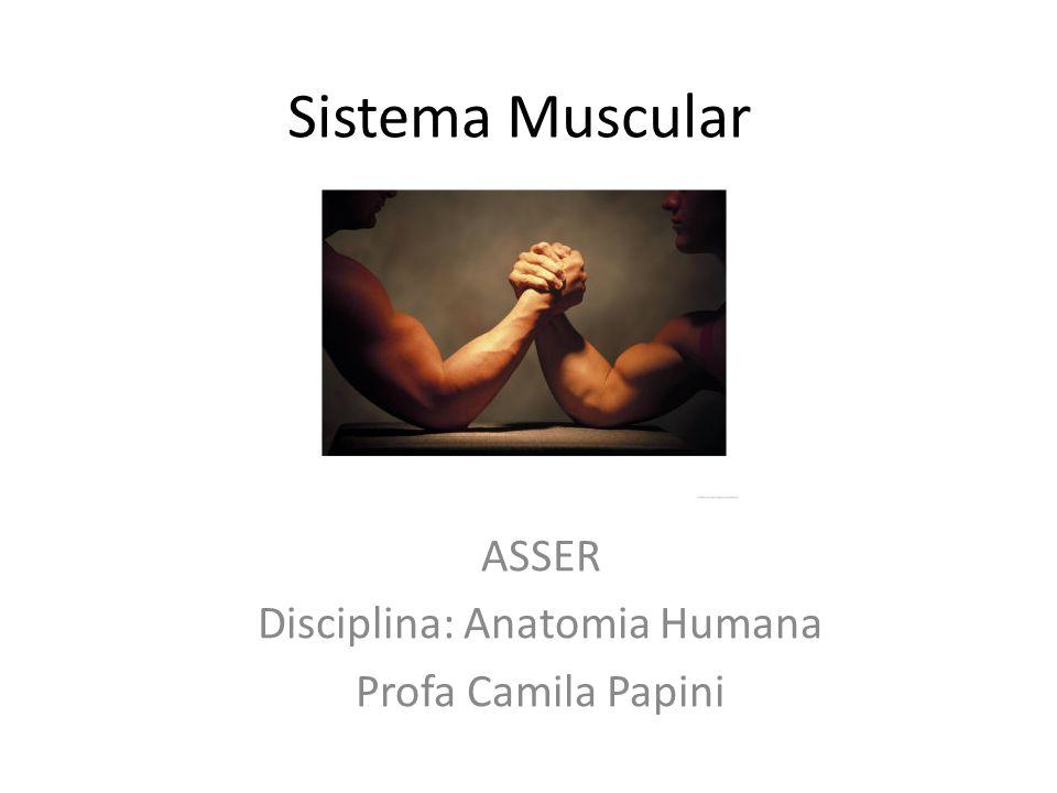 ASSER Disciplina: Anatomia Humana Profa Camila Papini
