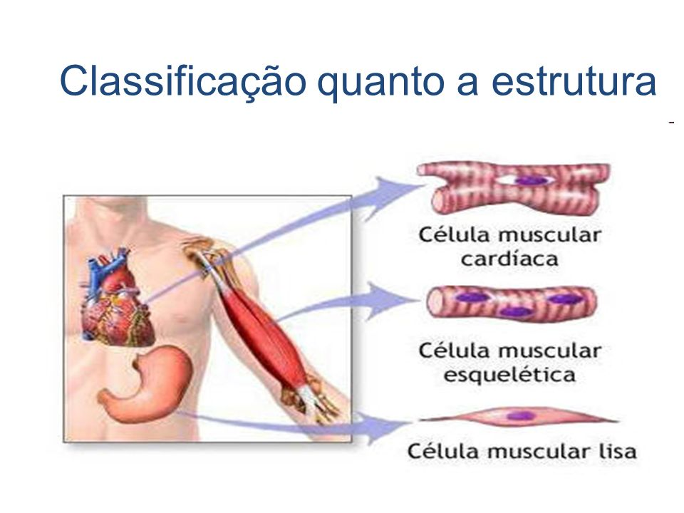 Classificação quanto a estrutura