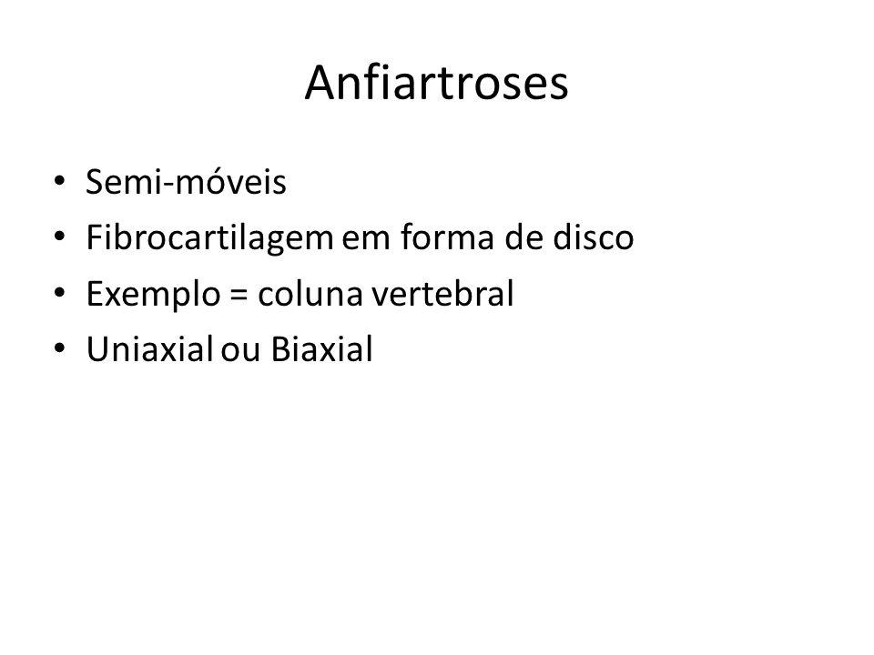 Anfiartroses Semi-móveis Fibrocartilagem em forma de disco