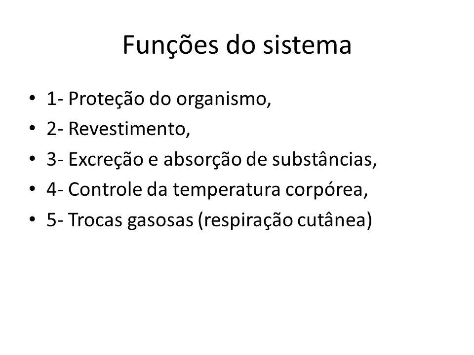 Funções do sistema 1- Proteção do organismo, 2- Revestimento,