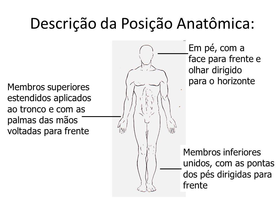 Descrição da Posição Anatômica: