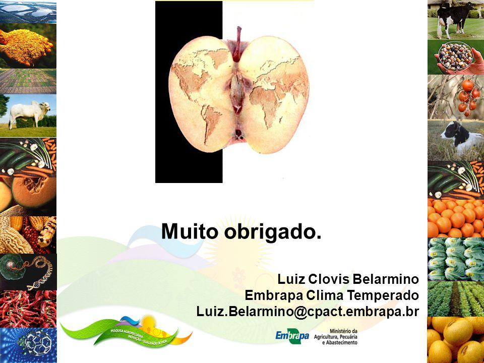 Muito obrigado. Luiz Clovis Belarmino Embrapa Clima Temperado