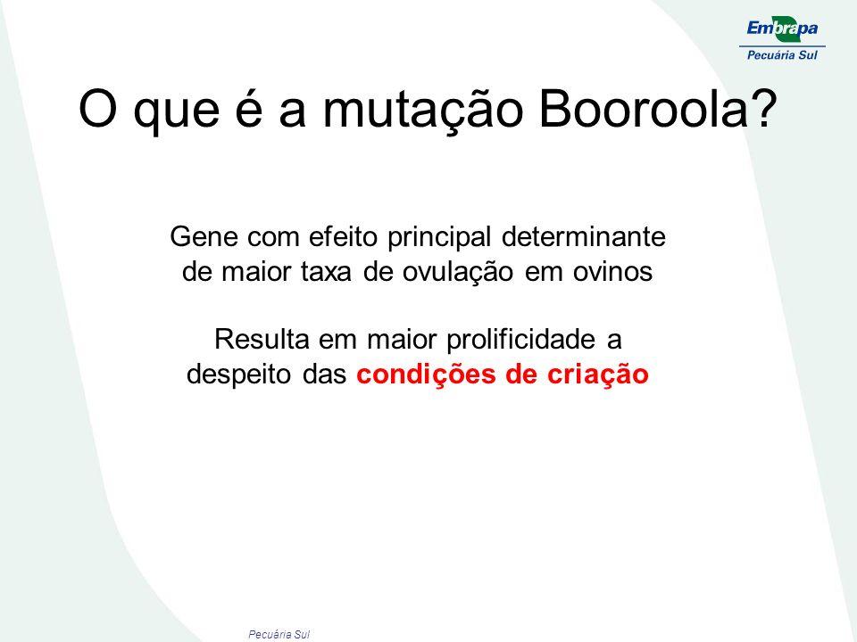 O que é a mutação Booroola