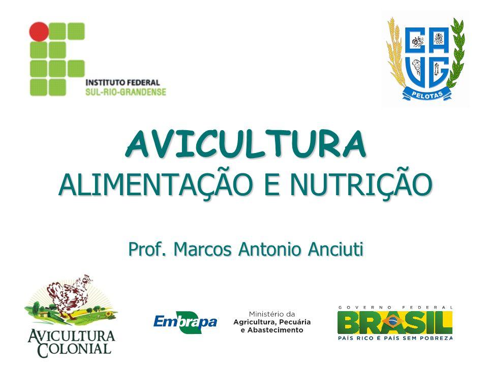 AVICULTURA ALIMENTAÇÃO E NUTRIÇÃO Prof. Marcos Antonio Anciuti