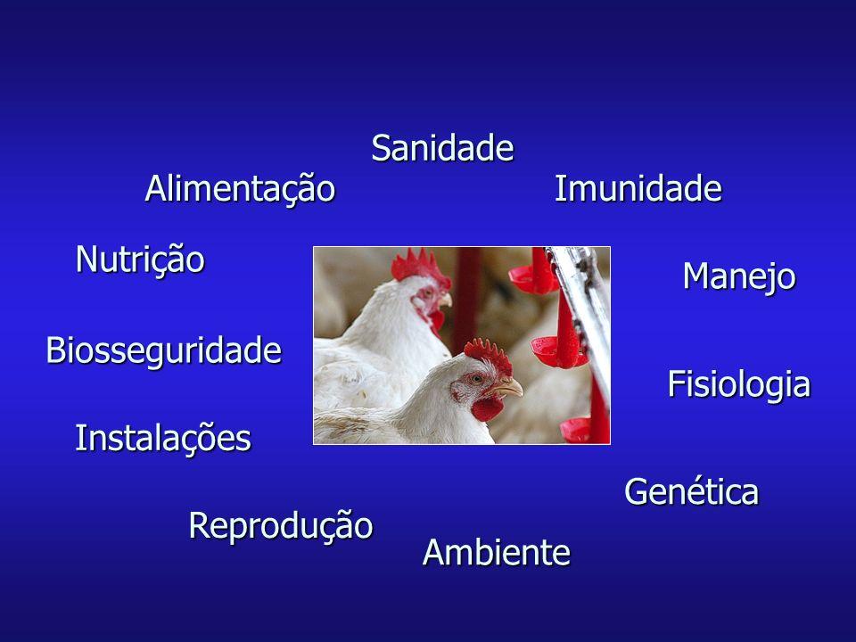 Sanidade Alimentação. Imunidade. Nutrição. Manejo. Biosseguridade. Fisiologia. Instalações. Genética.