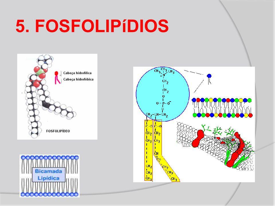 5. FOSFOLIPíDIOS