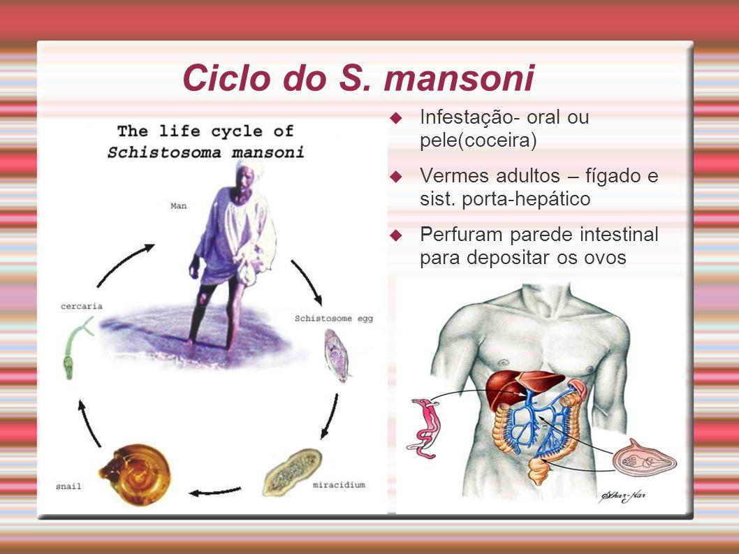 Ciclo do S. mansoni Infestação- oral ou pele(coceira)