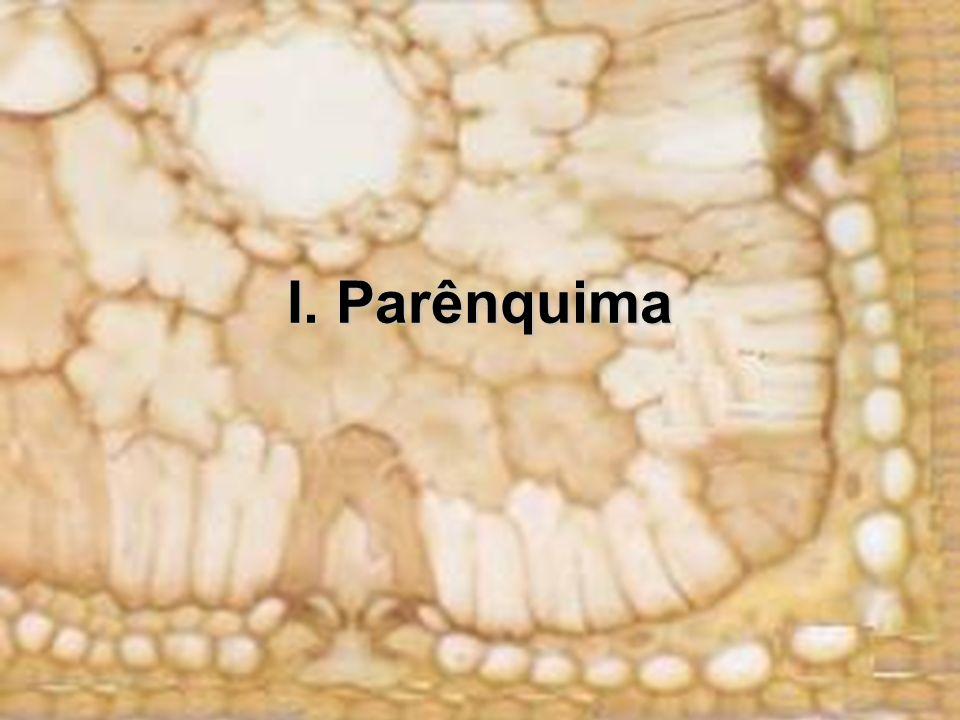 I. Parênquima