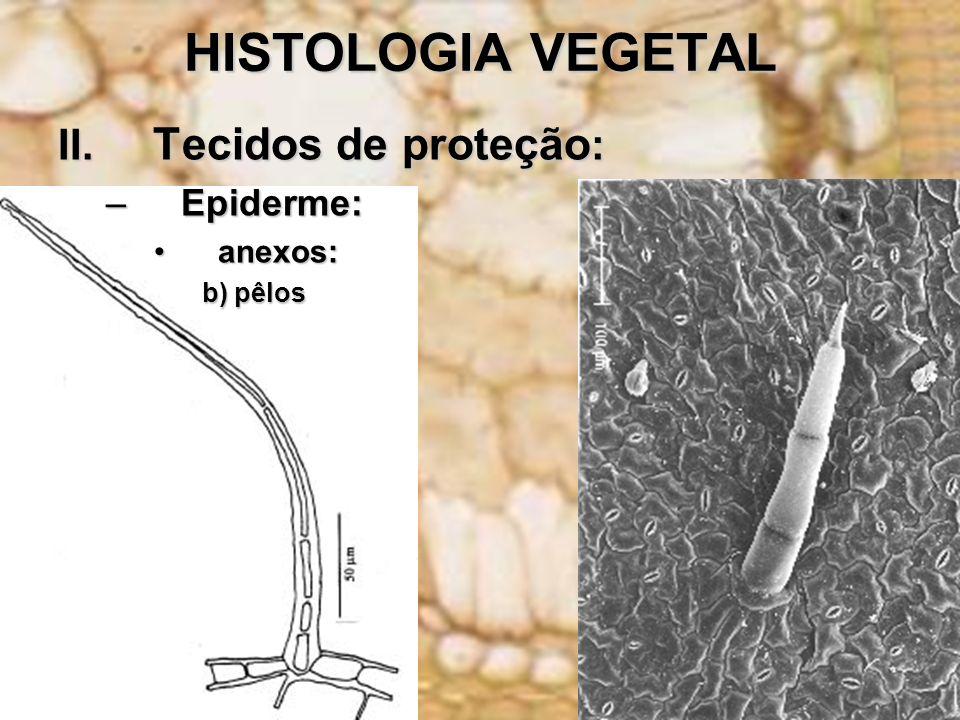 HISTOLOGIA VEGETAL II. Tecidos de proteção: Epiderme: anexos: b) pêlos