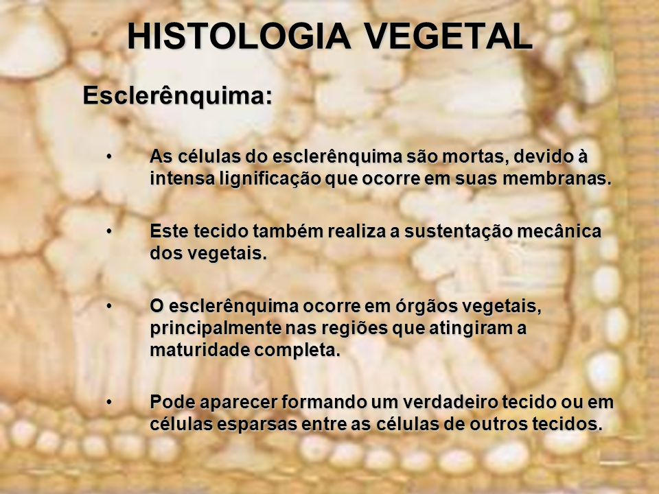 HISTOLOGIA VEGETAL Esclerênquima: