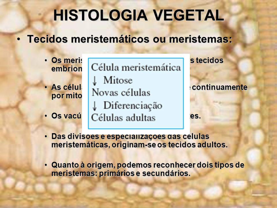 HISTOLOGIA VEGETAL Tecidos meristemáticos ou meristemas: