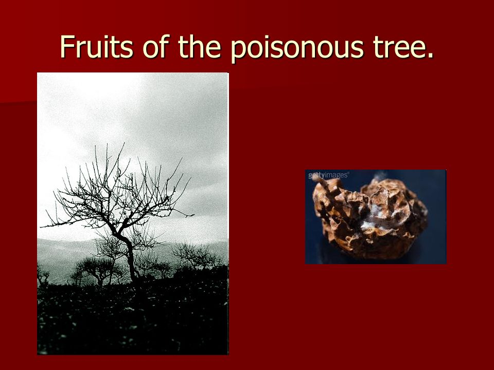 Fruits of the poisonous tree.