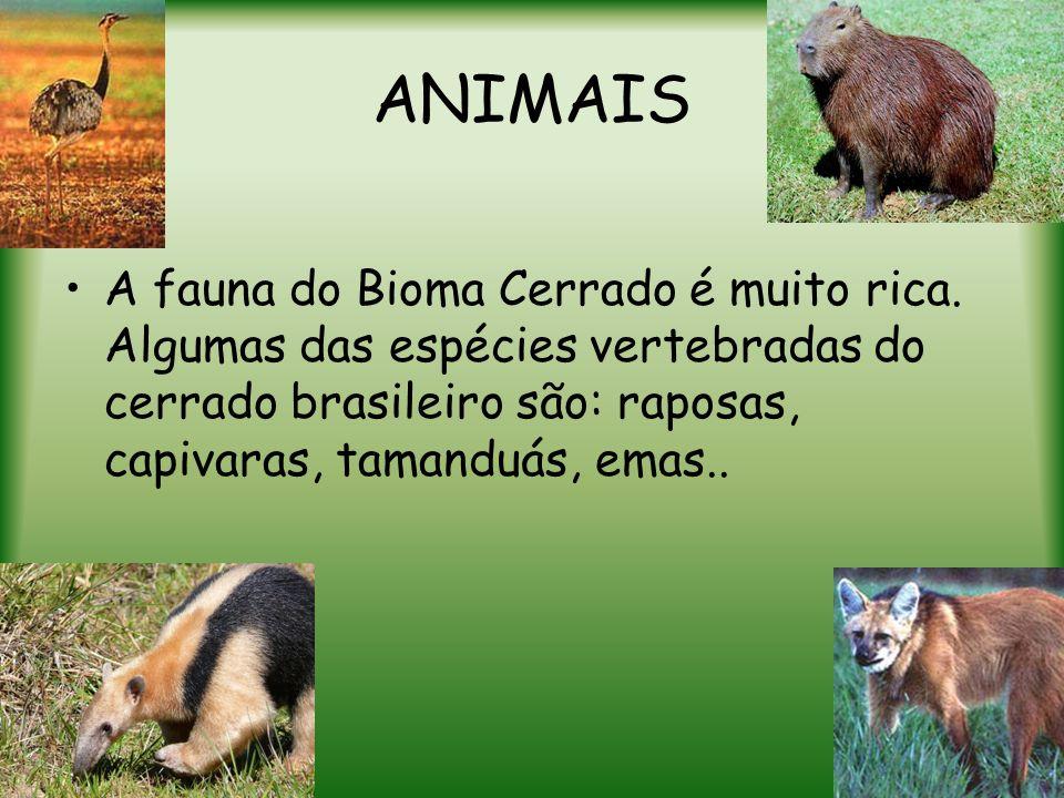 ANIMAIS A fauna do Bioma Cerrado é muito rica.